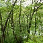 芽ぶきの森