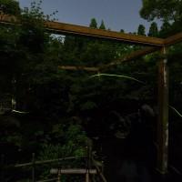 水景園のホタル鑑賞会