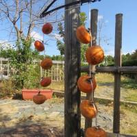 富有柿の干し柿とスライスチップづくり(予約制)