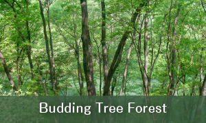 Mebuki-no-Mori (Budding Tree Forest)
