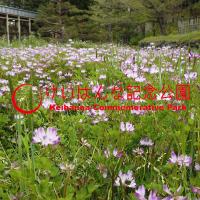 【動画】水景園レポート① 4月 ~田んぼのレンゲ~