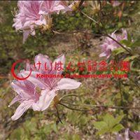【動画】水景園レポート④ 5月 ~春の芽ぶきの森おさんぽ編~