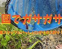 【動画】7月 公園でガサガサ