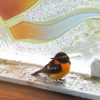 夏の小鳥たち