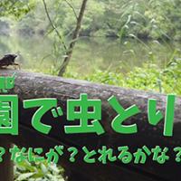 【動画】8月 公園で虫とり!