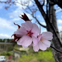 水景園の見どころ【2021.4.4清明】
