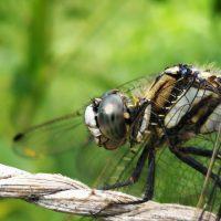身近な自然 ~昆虫への想い~