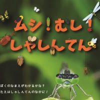 【動画】公園の虫を観察してみた!